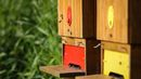 Na česnu je provoz. Jaro je pochopitelně obdobím, kdy jsou včely nejpilnější.