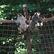 Část uprchlých makaků z olomoucké zoo se vrátila do výběhu