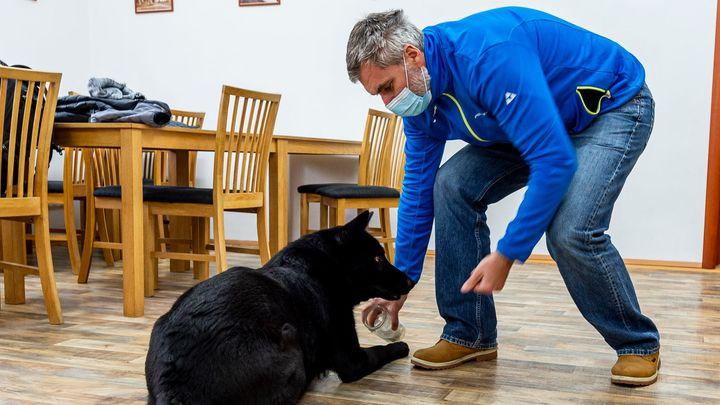 Psi umí rozeznat nakažené covidem, dokázal Čech. Denně mohou posoudit 20 tisíc vzorků