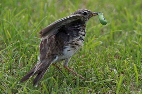 odborníci na sání ptáka
