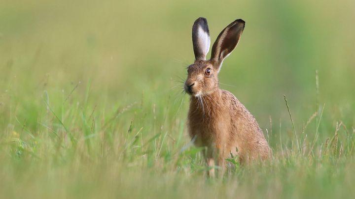 Myslivci na Brněnsku našli další uhynulé zajíce. Firma Bonagro potvrdila použití jedu