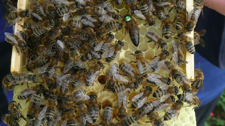 Krutá zima pro včelaře. Uhynula jim třetina včelstev