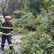 Hasiči kvůli větru zasahovali na 50 místech v Praze, odklízeli spadlé stromy