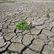 Rekordně teplý rok 2014 varuje: zimy v Česku budou bez sněhu