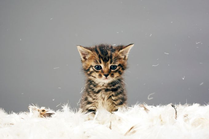 Těsné kočička sex video