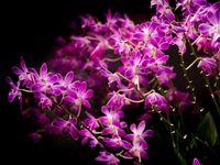 Křehká císařovna mezi květinami, která zažene vleklou zimu. V botanické zahradě začalo jaro