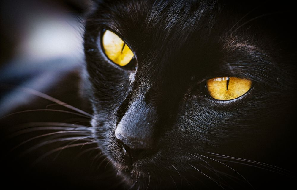 kůže černá kočička