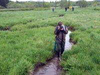 Bažiny proti suchu. Na Šumavě ruší meliorace a obnovují mokřady