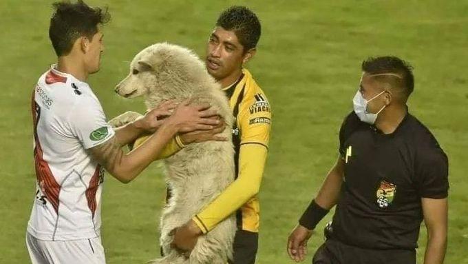 Roztomilý toulavý pes přerušil zápas v bolívijské lize