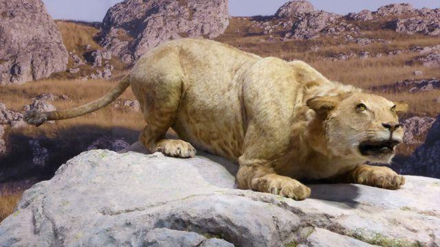 01203faa03e K vyhynutí lvů v Evropě zřejmě přispěl člověk. Šelmy lovil kvůli kožešině
