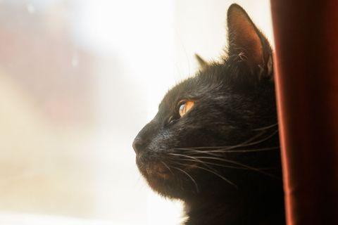 Videa černých žen jíst kočička