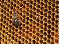 V Olomouci se vážně zranil včelař, snažil se zachránit hořící úl