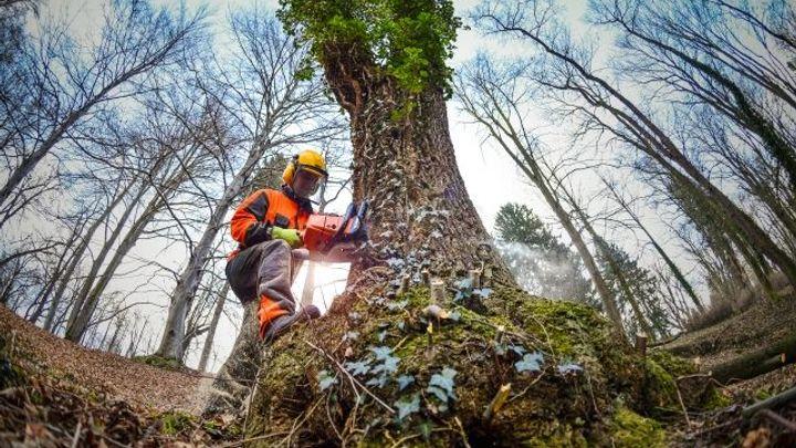 Státní Lesy ČR mají rekordní zisk, vydělaly sedm miliard