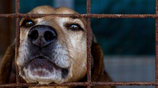 Čipování psů v půl roce věku je kompromis, který se podařilo prosadit. Záchranná akce to ale není, upozorňuje Martina Načeradská.