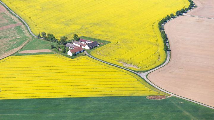 To je ten náš český Řepkoland. Žlutá záplava na 20 leteckých pohledech