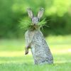 Comedy Wildlife Photography Awards 2017, finalisté soutěže