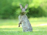 40 fotek zvířat, které pobaví. Nejlepší humorné snímky divoké přírody roku 2017