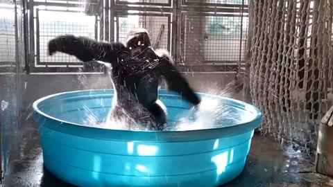 Videa videa z bazénu