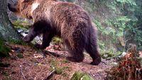 aba5c8b0e33 ... Medvěd na Valašsku napadl další zvířata