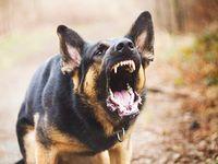 Psi na zahradě zabili pětileté dítě. Otec chlapce i majitel zvířat dostali od soudu podmínku