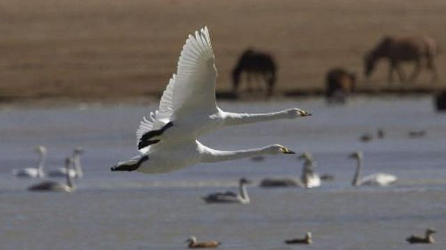 pic velkých ptáků