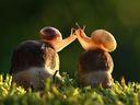 Nejzábavnější fotky zvířat, které vám zpříjemní den