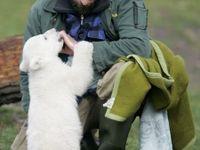 Vědci objasnili záhadné úmrtí polárního medvěda Knuta