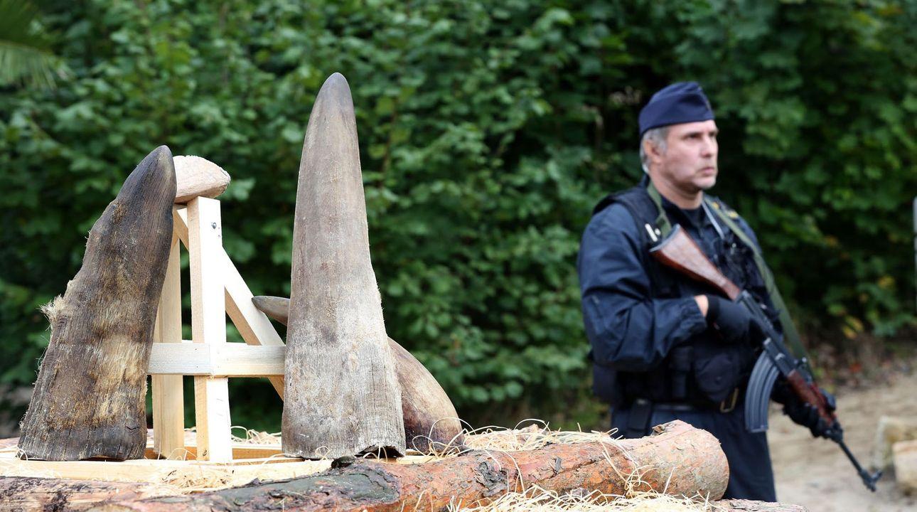 Pražského policistu stíhá GIBS kvůli údajnému prodeji rohu chráněného nosorožce