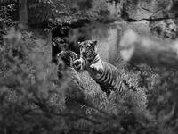 Osm rad, jak na skvělé snímky ze zoo. A 23 fotek, které vás přesvědčí, že to skutečně jde