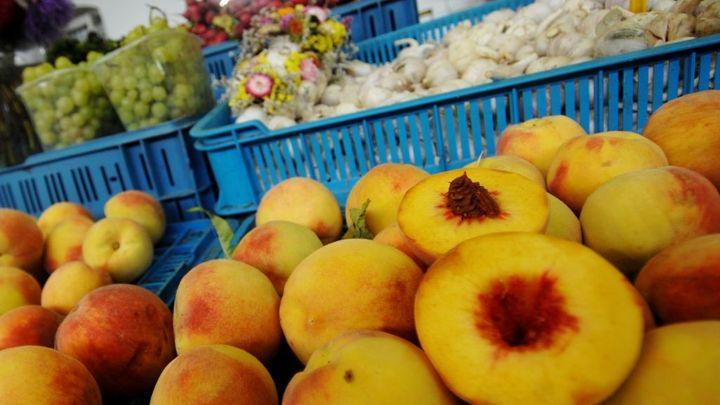 Pěstování broskví v Česku končí. Přestárlé sady se likvidují