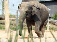 Slon v marocké zoo zasáhl kamenem sedmiletou dívku, zranění v nemocnici podlehla