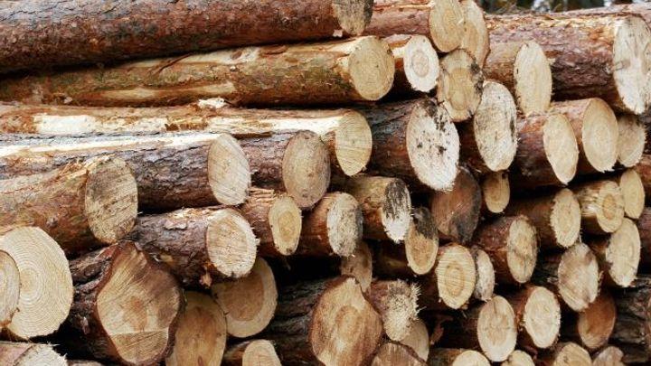 Nelegální těžba dřeva v lesích se rozmáhá, zjistila inspekce