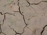 Kvůli suchu porostou ceny potravin, miliony lidí se můžou dát do pohybu, říká klimatolog