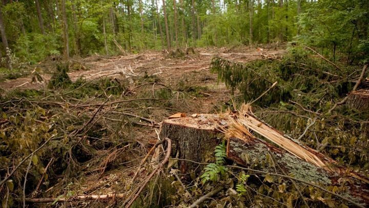 Polsko porušuje práva unie těžbou v Bělověžském pralese, uvedl generální advokát