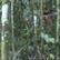 """""""Největší samotář na světě."""" Kamera zachytila posledního člena izolovaného kmene v Amazonii"""