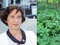 Potenciál rostlin v léčbě rakoviny je obrovský, neumíme toho využít, říká expertka