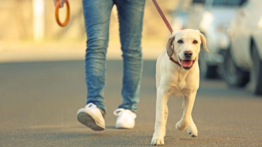 Češi jsou národem milovníků zvířat – skoro v každé domácnosti najdeme  nějakého mazlíčka 80ae4bba2b