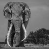 David Yarrow - Keňa