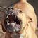 Pes na Brněnsku pokousal malou dívku, zranil také matku. Dítě museli lékaři uvést do umělého spánku
