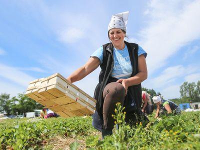 Co přinesl vstup do EU českému zemědělství? Klady i zápory přehledně