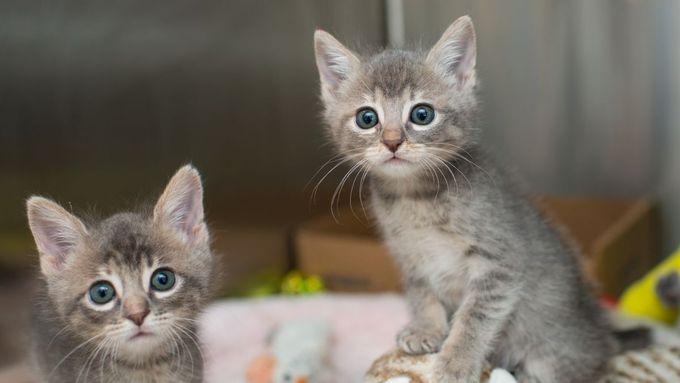 online milovníci koček