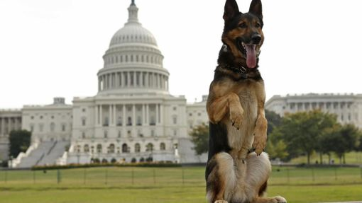 "Police dog ""Echo"" of the Lakeland, Florida, police force, has his picture taken by his handler at the U.S. Capitol in Washington October 3, 2013. Echo is competing in the annual United States Police Canine Association (USPCA) Field Trials in nearby Maryland. REUTERS/Kevin Lamarque (UNITED STATES - Tags: MILITARY SOCIETY ANIMALS) Published: Říj. 3, 2013, 6:22 odp. Odstranit"