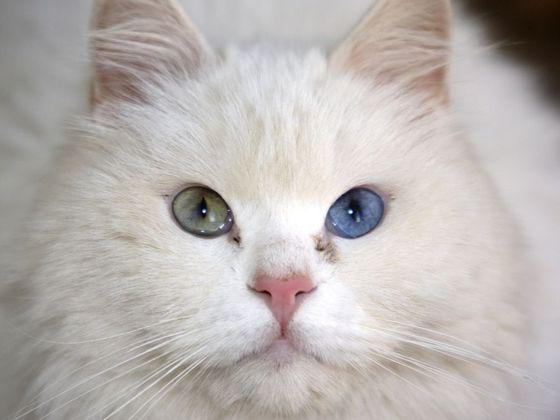 Příliv kočička