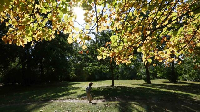 A child runs in the autumn sunshine in Battersea Park in London September 22, 2012. REUTERS/Olivia Harris (BRITAIN - Tags: SOCIETY ENVIRONMENT) Published: Zář. 22, 2012, 3:32 odp.
