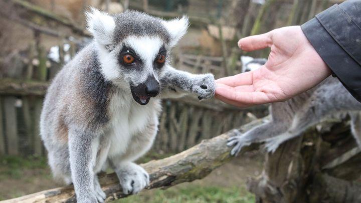 Soukromá zoo se bojí o přežití. Ve sbírce jí lidé přispěli už čtvrt milionu