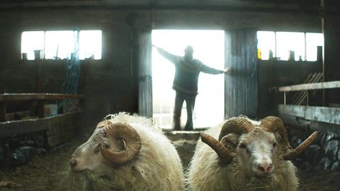 Soutěž: Vyhrajte lístky na mrazivou islandskou komedii Berani