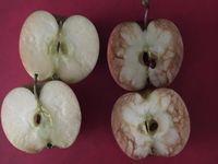 Vysvětlila dětem nebezpečí šikany pomocí jablek. Teď je hitem internetu