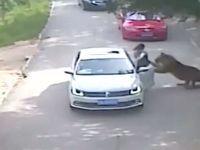 Ženu rozsápali tygři. Během návštěvy safari vystoupila z vozu