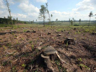 Ekologická katastrofa v Jeseníkách obrazem. Kůrovcová kalamita, jaká tu od dob Marie Terezie nebyla
