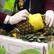 Žádná krabice s banány. Pašeráci schovali stovky kilogramů kokainu do ananasů
